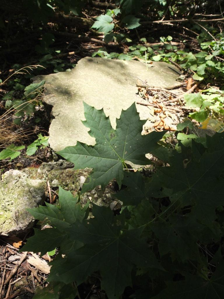 Bild eines Blattes im Schatten, dahinter eine von der Sonne beleuchtete Steinplatte