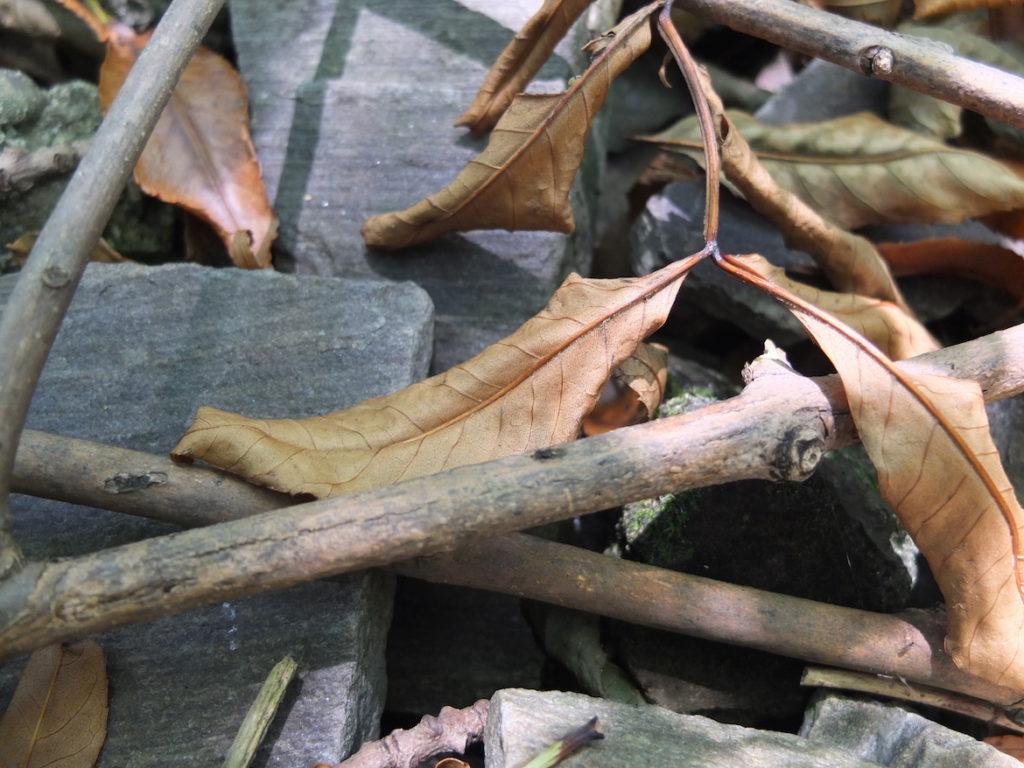 Bild einer Schieferplatte, darüber vertrocknete Blätter