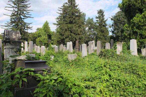 Bild von völlig überwucherten Grabsteinen am jüdischen Friedhof
