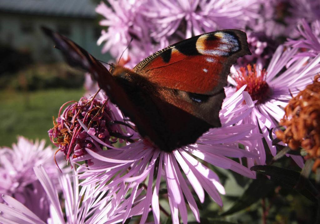 Herbstblume mit Schmetterling